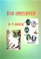 八年级哺乳动物ppt_八年级上册_新人教版_哺乳动物课件PPT_wor