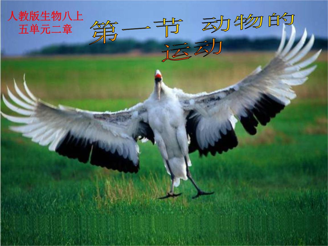 第一节 动物的运动幻灯片1.ppt
