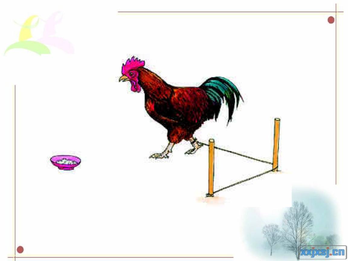 动物绕道取食及社会行为.ppt