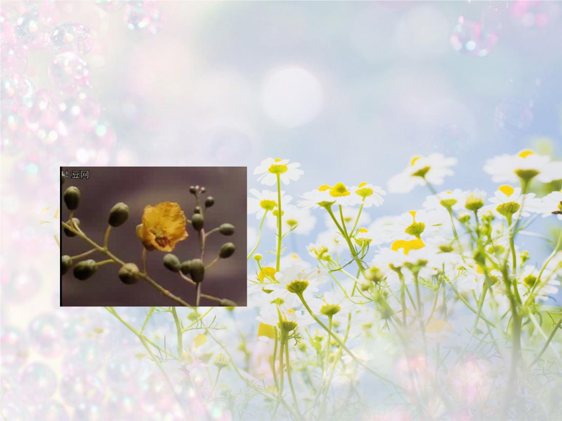 花的结构与植物的生殖.ppt