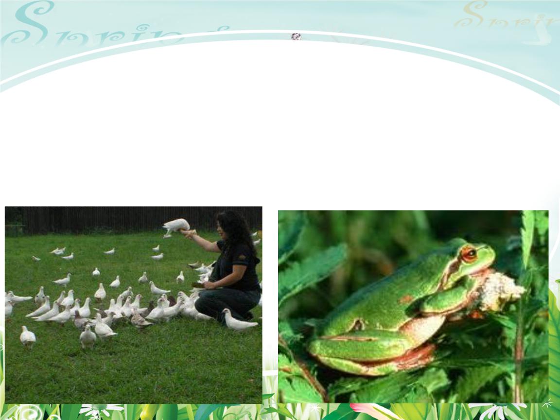 保护有益的小动物精选.ppt