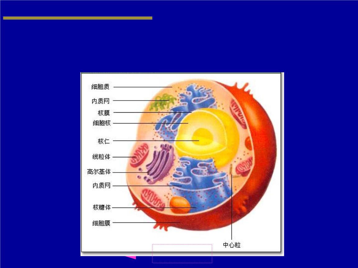动物细胞亚显微结构模式图.ppt