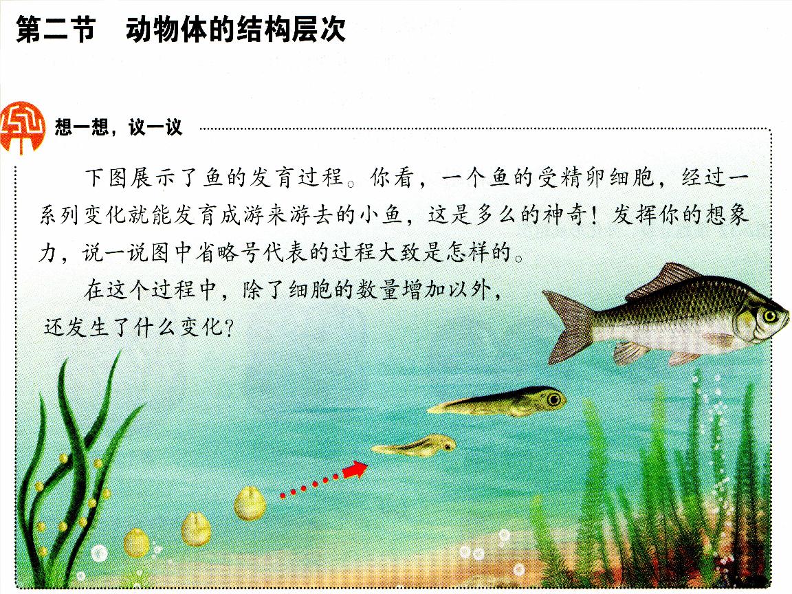 2.2 动物体的结构层次课件 (新版)新人教版.ppt》