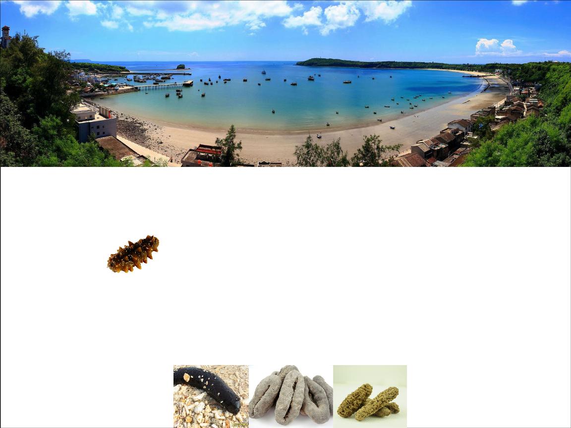 公司在大连市长海县小长山岛拥有万亩无公害海域,在大连市金州区拥有