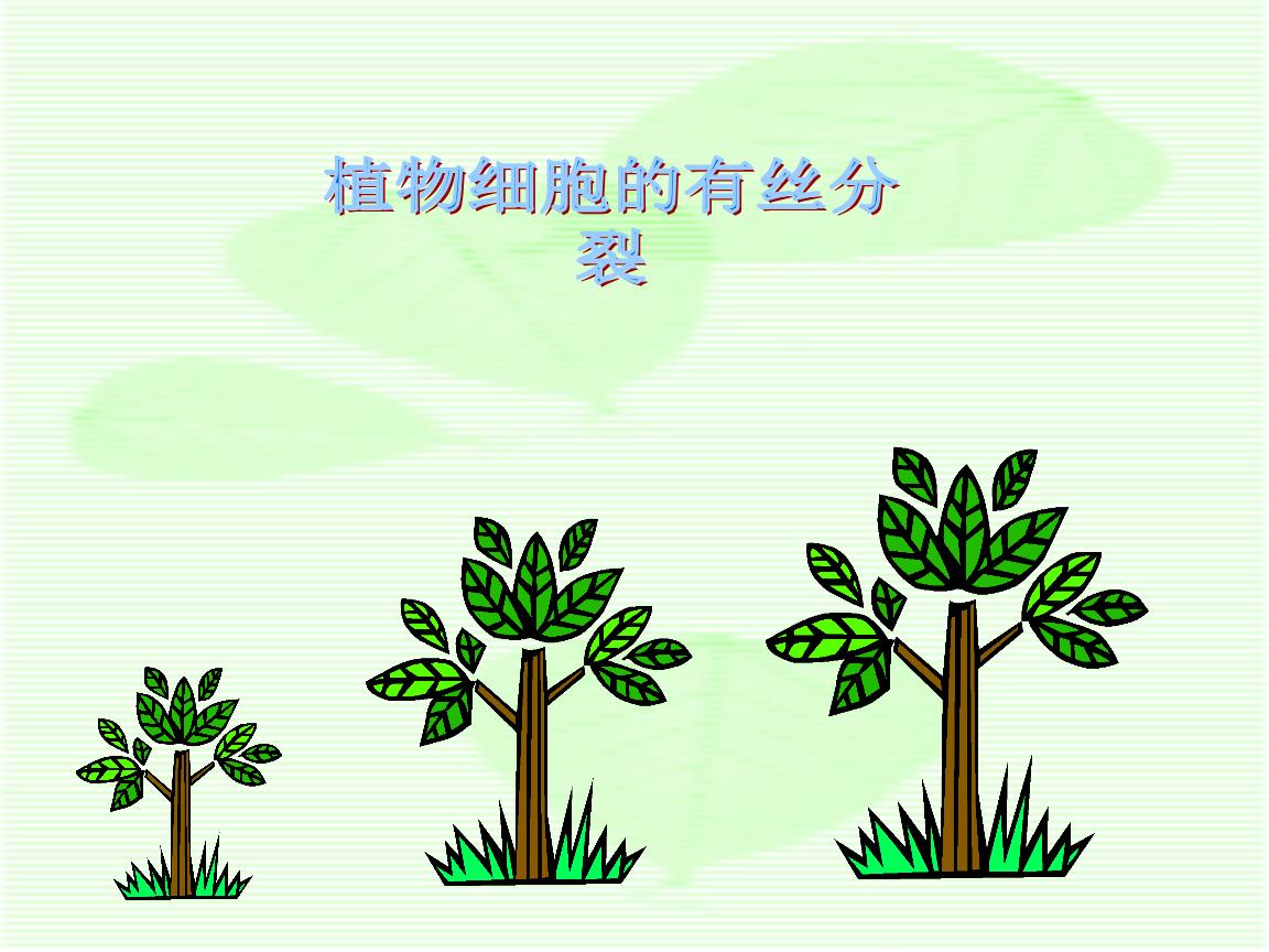 植物有丝分裂1.ppt