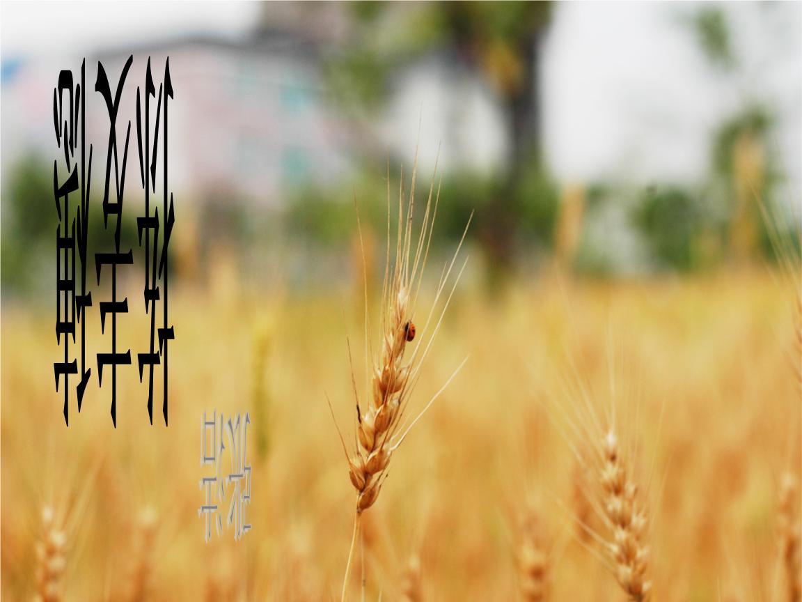 文艺麦穗手绘图