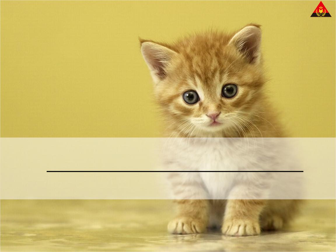 ppt素材小猫