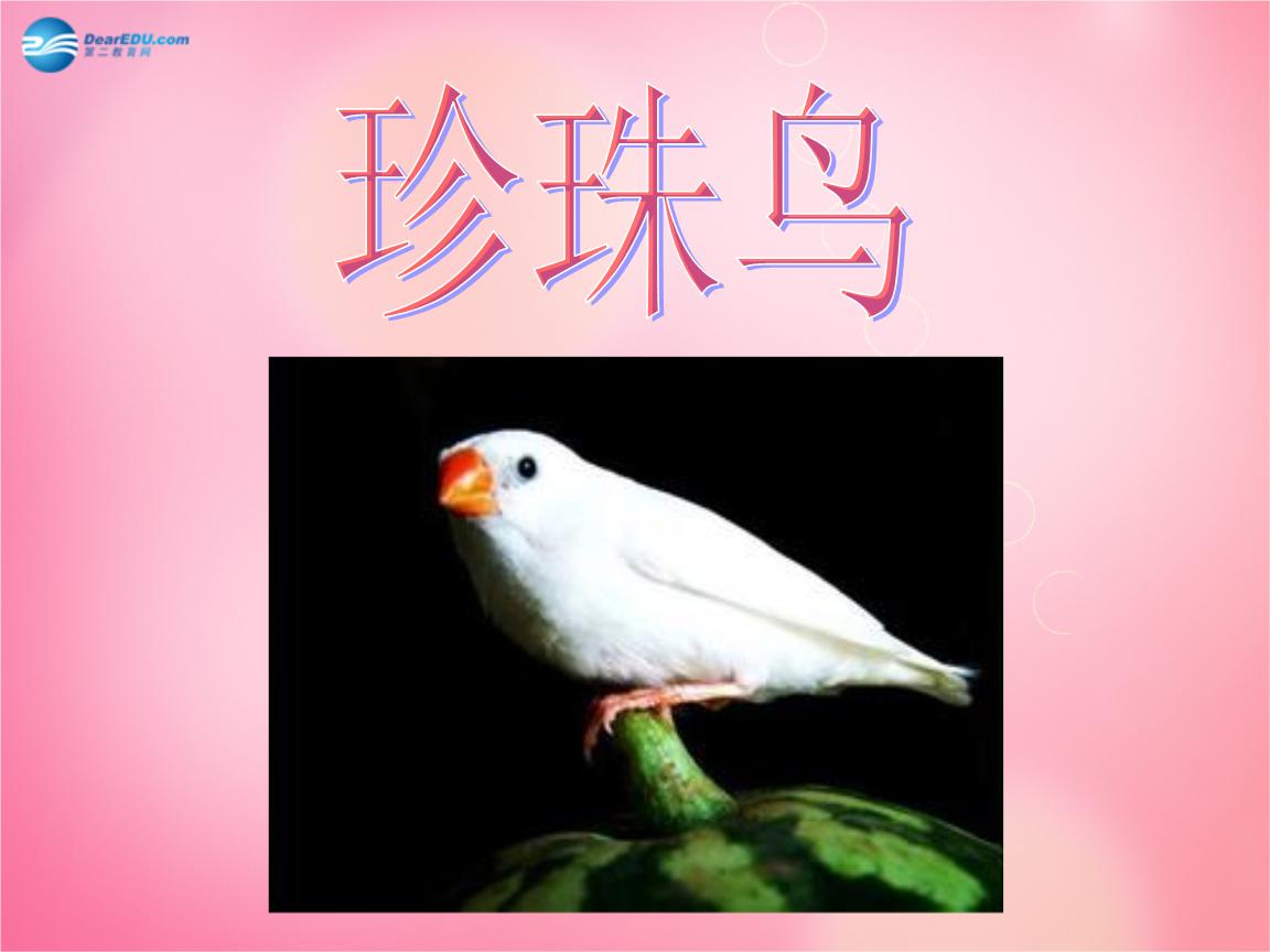 2017年五新人环节上册16.珍珠鸟课件中学教河南省v新人语文备课四个年级图片