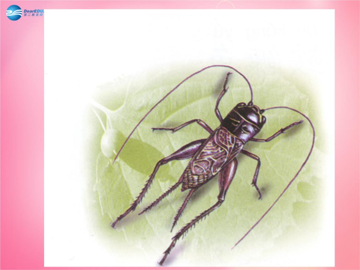 2017年四年级语文上册 7.蟋蟀的住宅课件 新人教版.ppt