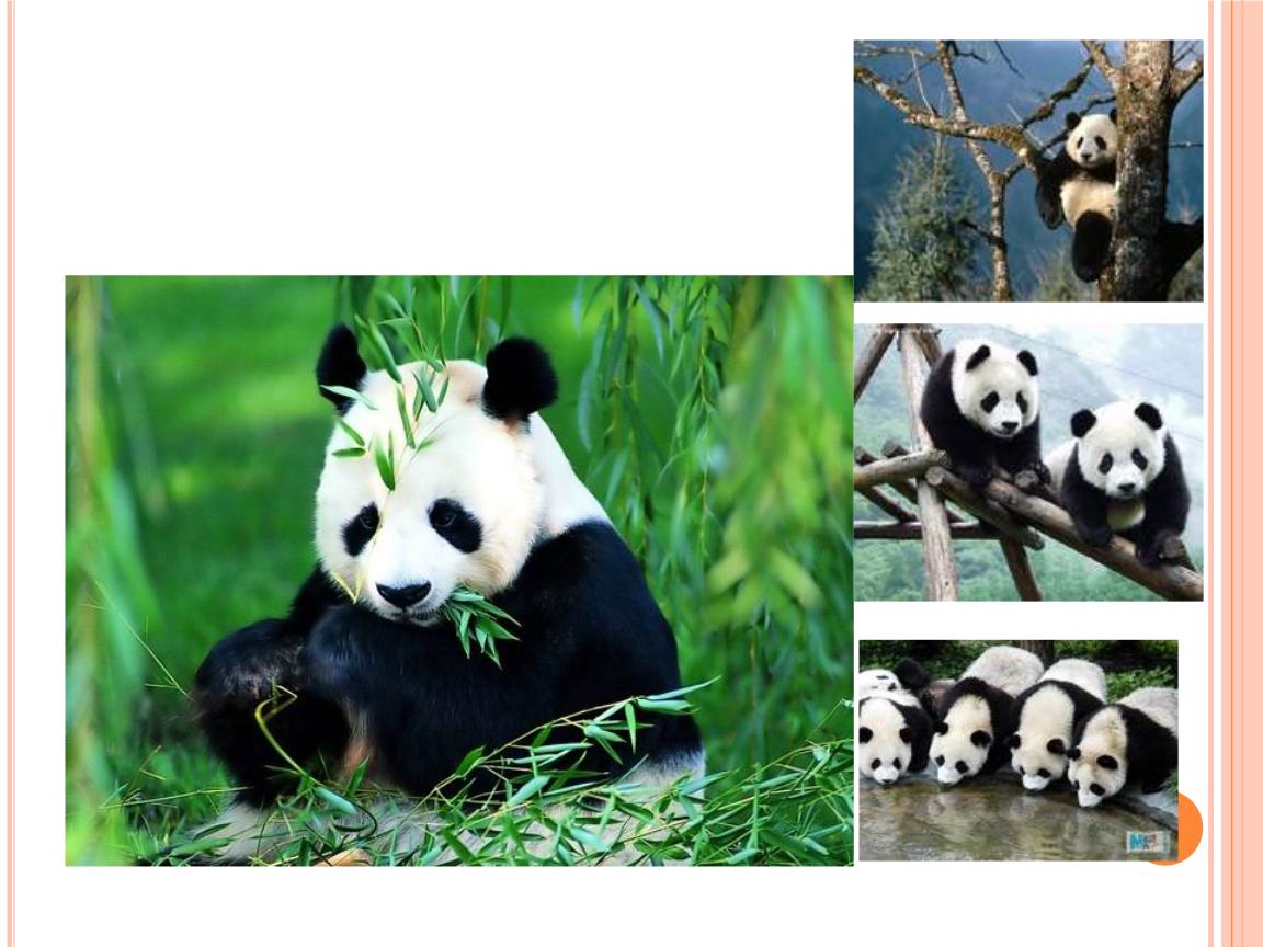 世界珍稀动物.pptx