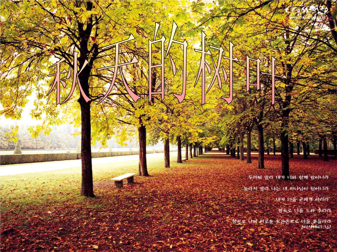 秋天的树叶ppt.ppt