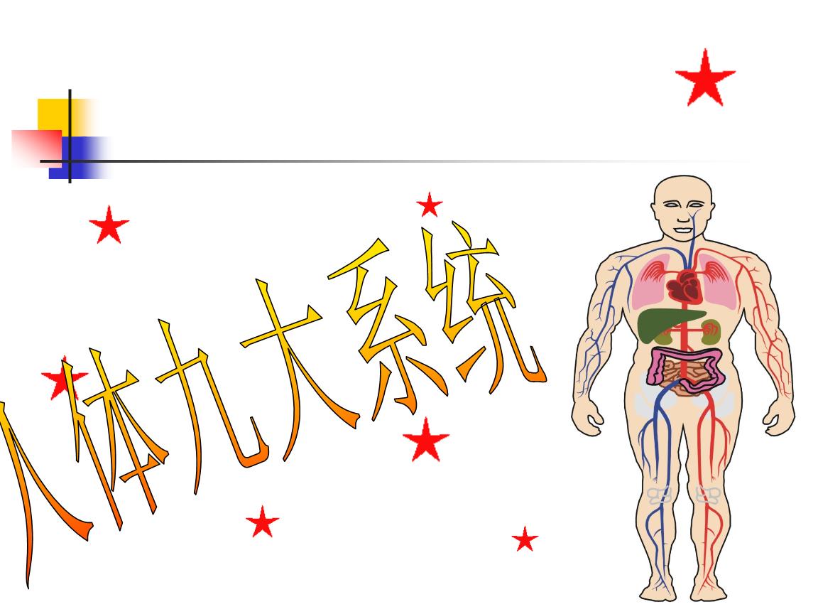 人体系统_人体九大系统全解.ppt