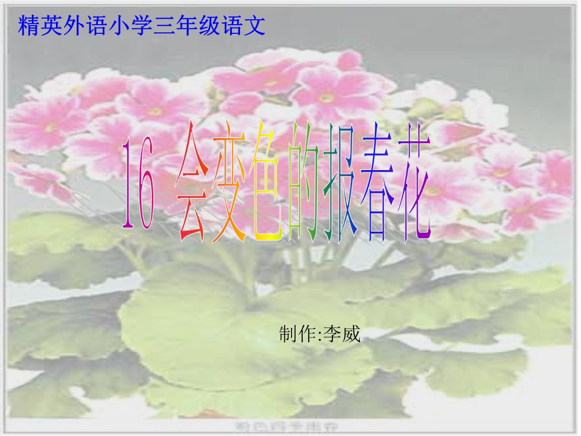 会报春的迎春花精要.ppt